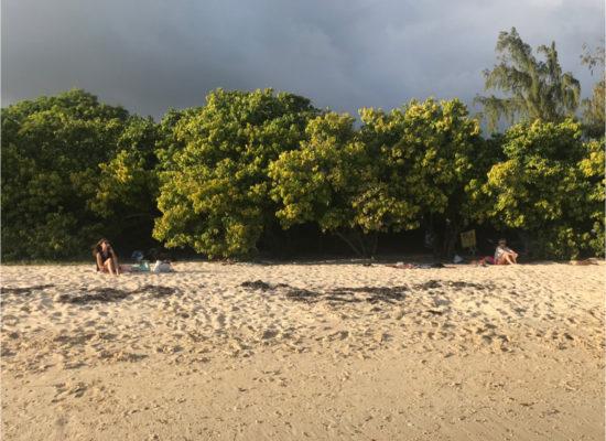 plage sauvage arbres